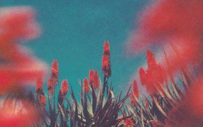 Hay días que pasan flores, y otros días que dejas de querer queriendo.